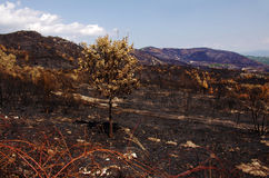 Burned Land Stock Photos