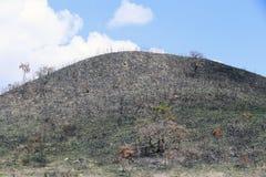 Burned land Royalty Free Stock Image