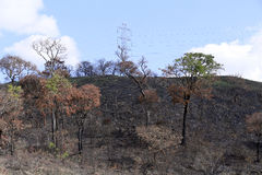 Burned land. View of burned land inside brazil. circa june 2015 Royalty Free Stock Photo