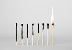 Burned Matches. Array of symmetrically burned matches stock images