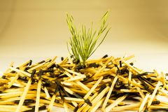 Burned matches, a living plant sprouts. Big slide. Side view stock photography