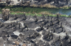 Burned Palm Trees On Preveli Beach Royalty Free Stock Images