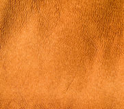 Burned skin leather texture Royalty Free Stock Photography