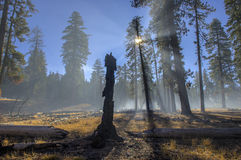 Burned stump and smoke from a controlled burn, Lassen Volcanic National Park. Burned stump and smoke in early morning from a controlled burn at Lassen Volcanic stock photography