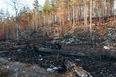 Burned Taiga Forest in Autumn Finland Royalty Free Stock Photos