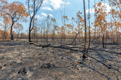 Burned to plant crops. Rainforest cut and burned to plant crops royalty free stock image