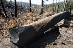 Burned tree Royalty Free Stock Photography