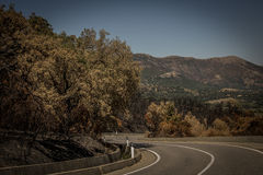 Burned trees alongside road on Sardegna. A weird landscape on this beautiful island stock photography