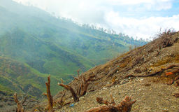 Burned Trees Around Kawa Ijen Volcano. East Java, Indonesia Stock Images