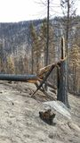 Burned trees and ash. Burned trees from a wildfire and an ash covered forest floor. Okanogan Complex wildfires summer of 2015. These were the biggest wildfires royalty free stock images