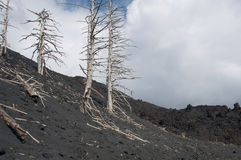 Burned trees on volcano Royalty Free Stock Photos