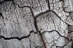 Texture of burnt tree closeup. royalty free stock images