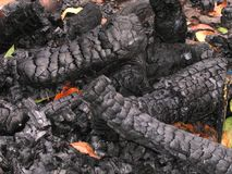 Burned Wooden Logs. At a camp fire site Stock Image