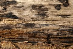 Burned wooden surface, textured and detailed. Old rough and burned wooden surface close up, dirty, textured and detailed Stock Photo