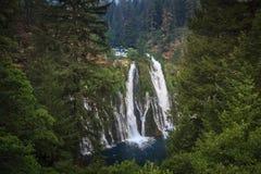 Burneydalingen bij het Park van de Staat mcArthur-Burney, Californië Stock Fotografie