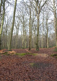 Burnham Beeches. In the middle of winter Stock Photography