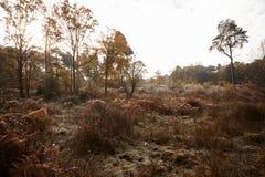 Burnham Beeches, het UK - 7 November 2016: Autumn Trees And Bracken At Burnham Beeches In Buckinghamshire royalty-vrije stock afbeeldingen
