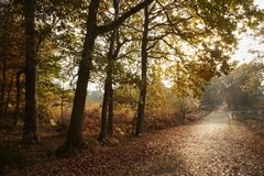 Burnham Beeches, UK - 7 November 2016: Road Through Autumn Trees At Burnham Beeches In Buckinghamshire Stock Photo