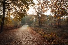 Burnham Beeches, UK - 7 November 2016: Road Through Autumn Trees At Burnham Beeches In Buckinghamshire Royalty Free Stock Images