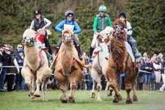 Burnham Market internationella hästförsök 2017 Royaltyfri Foto
