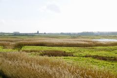 Reed beds and inner marsh. Royalty Free Stock Photos