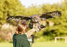 Burnham on sea, Somerset, 23 rd June 2015.European Eagle owl staring at handler. stock photos