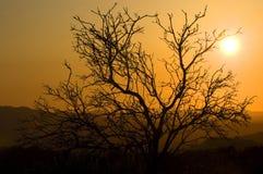 burnin θάμνος στοκ φωτογραφίες