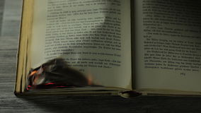 Burning antique book stock video