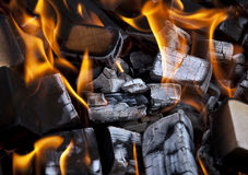 Burning beech wood Stock Photography
