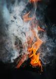 Burning birch firewood Stock Photography