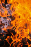 Burning birch firewood Royalty Free Stock Image