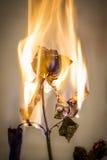 burning blomma Royaltyfria Bilder