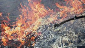 Burning bonfire of dry branches stock video footage