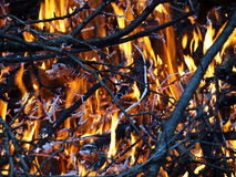 Burning branches Stock Image