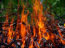 Burning branches Royalty Free Stock Photo