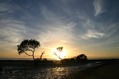 Burning Bush. Sunrise taken highlighting mangrove trees at beach Royalty Free Stock Photography