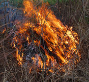 Burning bush. Bushfire/Wildfire closeup in summer royalty free stock photos