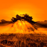 Burning Bush Stock Photography