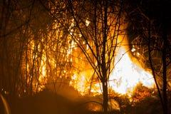 Free Burning Bush At Night Stock Photography - 52096512