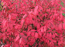 Burning Bush Background Stock Images