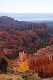 Burning Bush at Bryce Canyon. Quaking aspen trees look like they're on fire when the sun is low in Bryce Canyon stock image