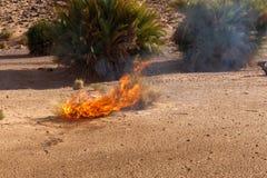 Burning Bush grass in the desert. Burning Bush grass in the Sahara desert, Morocco Royalty Free Stock Image