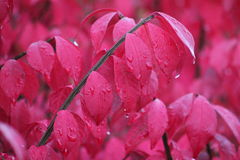 Burning bush in the rain royalty free stock photography