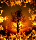 The Burning Bush Tree. A bush with glowing light behind it surrounded by flames aka. Book of Exodus concept stock photo