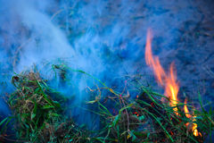 Burning Bush Royalty Free Stock Photography