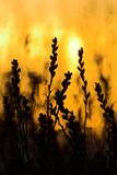 burning buske Arkivbild