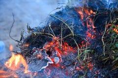 burning buske Fotografering för Bildbyråer