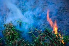 burning buske Royaltyfri Fotografi