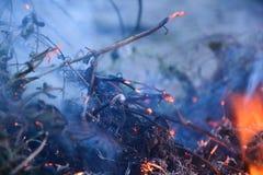 burning buske Royaltyfria Bilder