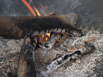 Burning camp fire with coals and flames Stock Image